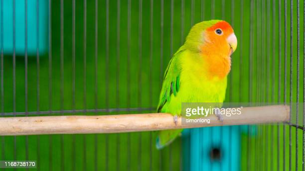 landscape view of bird on branch - domestic animals stock pictures, royalty-free photos & images