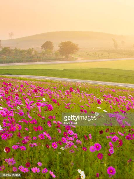 landscape view of chiangrai, thailand - trapa stock pictures, royalty-free photos & images