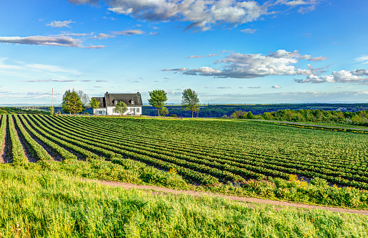 Landscape view of farm in Ile D'Orleans, Quebec, Canada with house 968626210