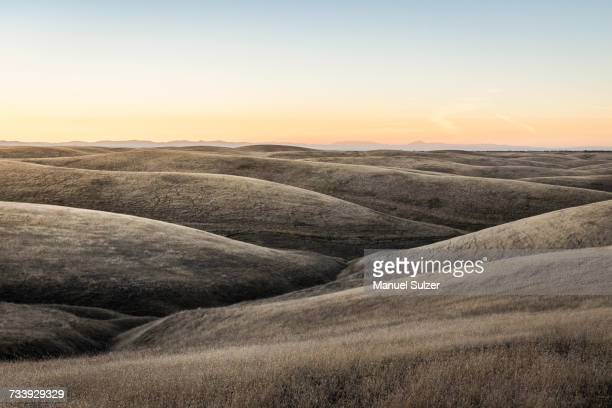 landscape view of rolling prairie hills, bakersfield, california, usa - prairie stock photos and pictures