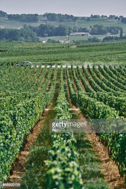 landscape view of vineyard and grapevines, bergerac, aquitaine, france - ベルジュラック ストックフォトと画像