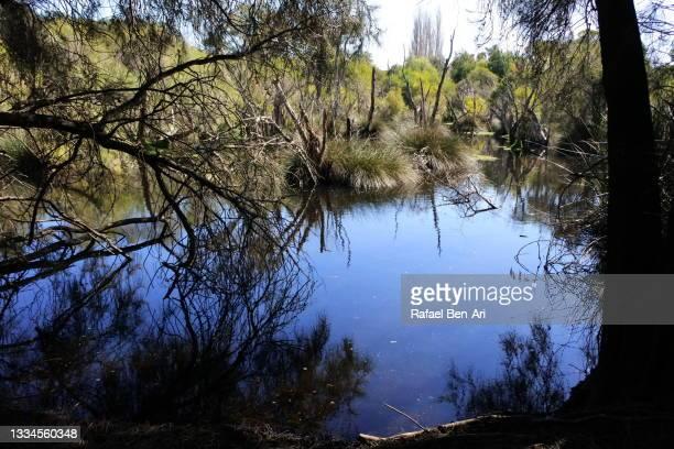 landscape view of water swamp - rafael ben ari fotografías e imágenes de stock