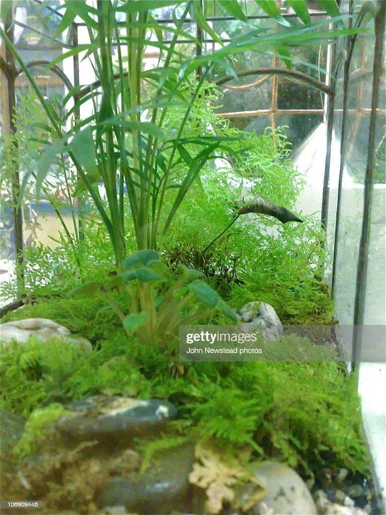'Landscape view' - Wardian Case Terrarium : Stock Photo