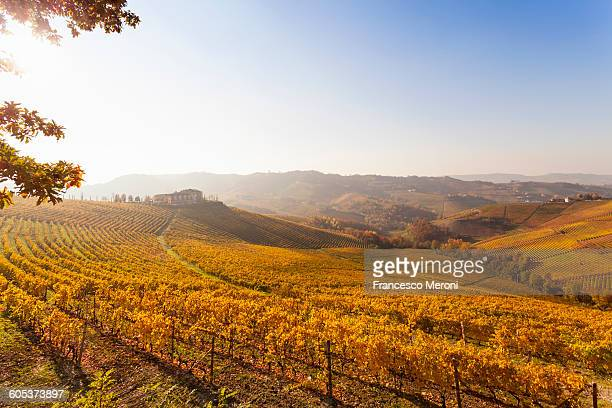 Landscape view with autumn vineyards at sunrise, Langhe, Piedmont, Italy