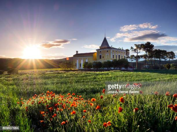 landscape with a church in the field surrounded with fields of wheat with the beams of the sun of the dawn in spring  in bocairent, valencian community, spain. - valencia spain stock pictures, royalty-free photos & images