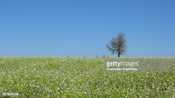 a landscape with a tree and flowers blooming in the field, karen hills, remote myanmar - argenberg fotografías e imágenes de stock