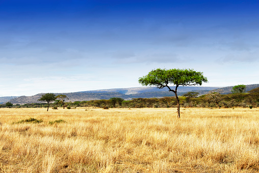 Landscape with acacia trees in the Ngorongoro Crater, Tanzania 586943724
