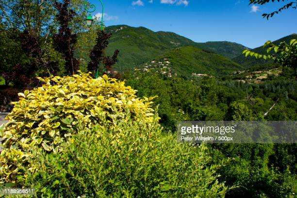 landscape with bushes and cevennes mountains, le vigan, gard, france - ガール県 ストックフォトと画像