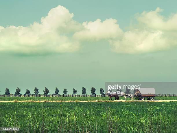 landscape with carriage - delta del ebro fotografías e imágenes de stock