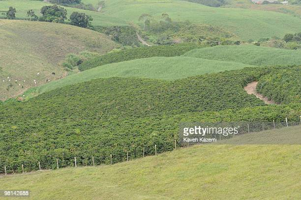 Landscape with coffee farms on the hill in Combia Risaralda Risaralda is a department of Colombia It is located in the western central region of the...
