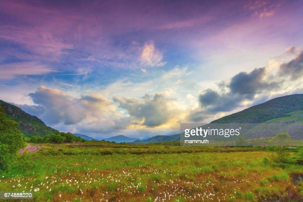 landscape with cottongrass field along the ring of kerry, ireland - ring of kerry stock photos and pictures