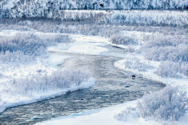 Landscape with elk in river Storelvvassdraget in winter, Lebesby, Norway
