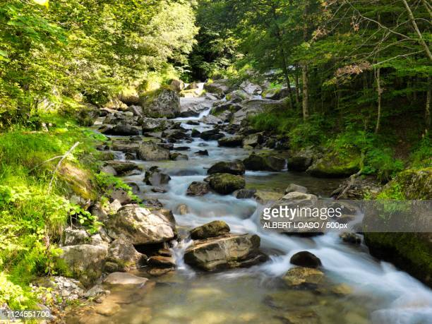 landscape with forest creek - flowing water stock pictures, royalty-free photos & images