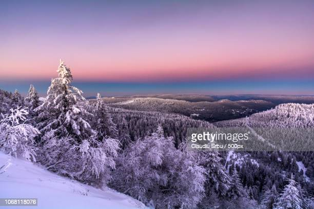 Landscape with forest on mountainside in winter at sunset