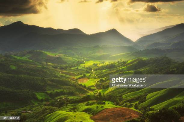 landscape with green corn field - wiratgasem stock photos and pictures