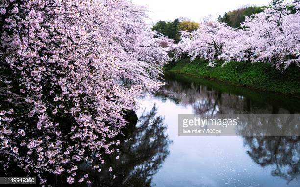 landscape with hirosaki castle park - hirosaki castle stock pictures, royalty-free photos & images