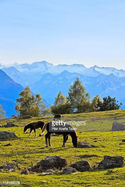 landscape with horses - provinz lerida stock-fotos und bilder