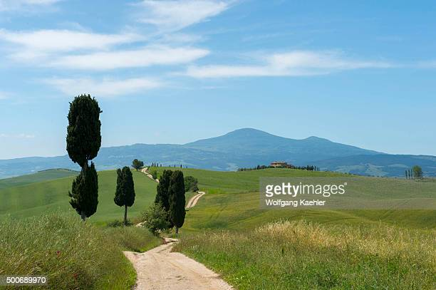 Landscape with Italian cypress trees and gravel road in the Val d'Orcia near Pienza in Tuscany, Italy.