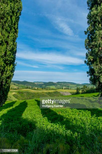Landscape with Italian cypress trees in the Val d'Orcia near Pienza in Tuscany, Italy.