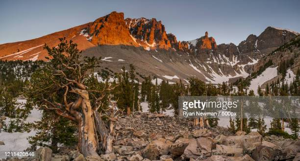 landscape with jeff davis peak and wheeler peak, great basin national park, nevada, usa - great basin stock pictures, royalty-free photos & images