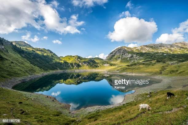 landschaft mit see in den bergen österreichs - vorarlberg stock-fotos und bilder