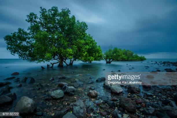 landscape with mangrove tree, lembata, east nusa tenggara, indonesia - east nusa tenggara stock pictures, royalty-free photos & images