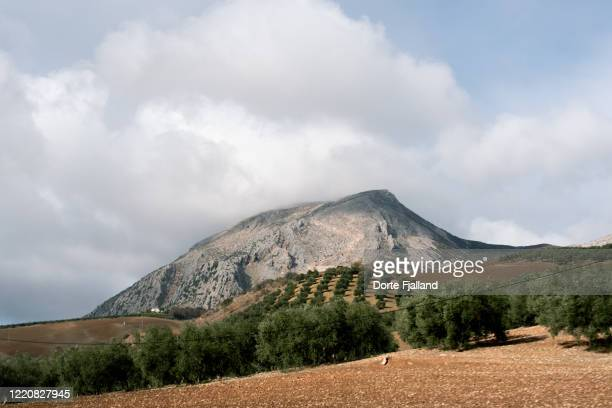 landscape with olive trees and a grey mountain and a cloudy sky in the background - dorte fjalland stock pictures, royalty-free photos & images