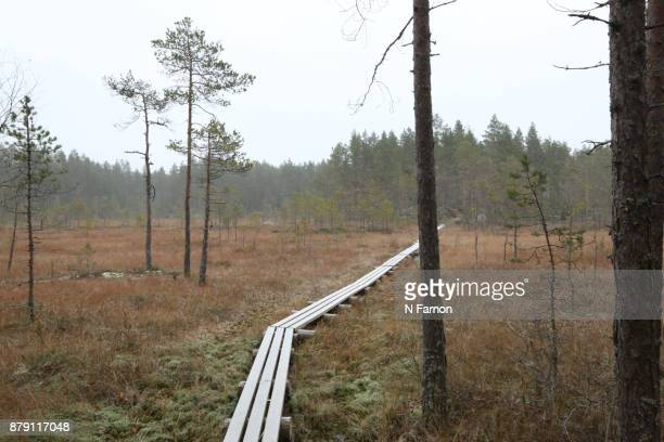 Landscape with pathway in National Park, Finland