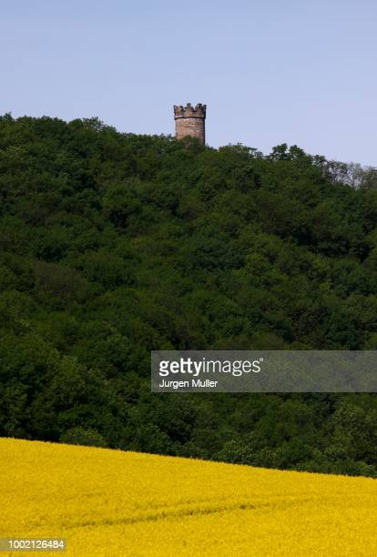 Landscape with rape field, castle ruins, Thuringia, Germany