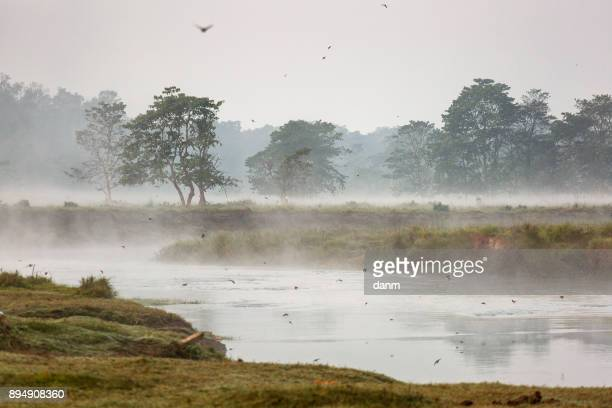 landscape with river in the morning with fog on chitwan national park, nepal - chitwan stock pictures, royalty-free photos & images