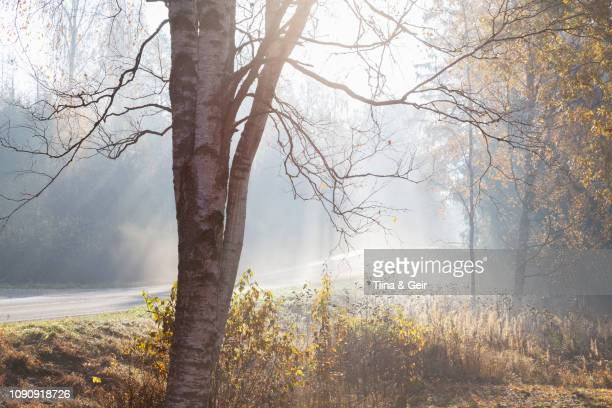 landscape with rural road and woodland in rays of misty autumn sun, lohja, southern finland, finland - kale boom stockfoto's en -beelden