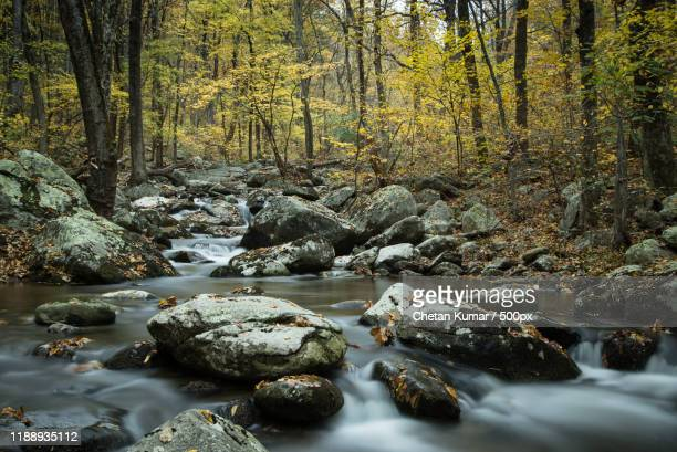 landscape with stream in forest in autumn, shenandoah national park, virginia, usa - category:shenandoah_national_park stock pictures, royalty-free photos & images