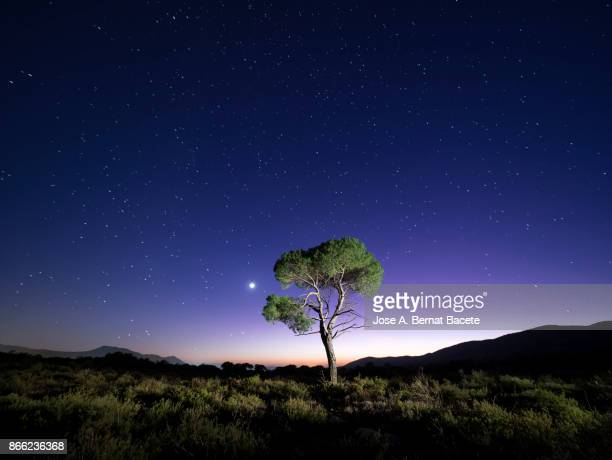 Landscape with the silhouette of an alone solitary tree in a great plain, a night of blue sky with stars. Bocairent,  Valencian Community, Spain.