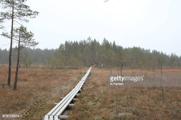 Landscape with  tree & pathway in National Park, Finland