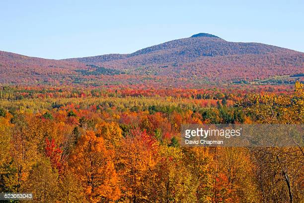 Landscape with trees in autumnal colours, Mansonville, Quebec, Canada