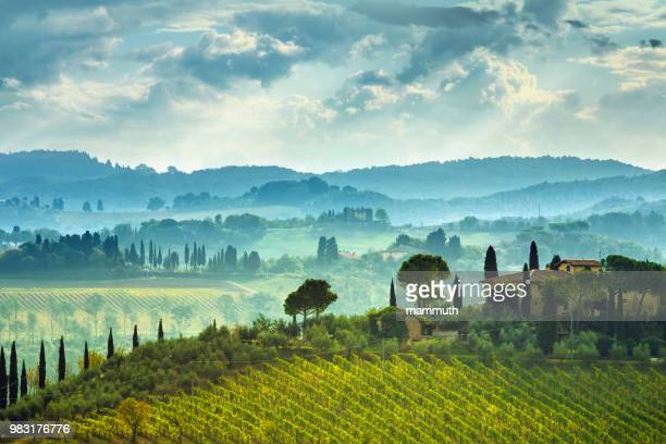 landscape with vineyard in tuscany, italy - cypress tree stock pictures, royalty-free photos & images