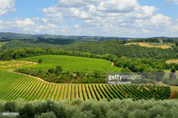 Landscape with vineyards, Monteriggioni, Province of Siena, Tuscany, Italy