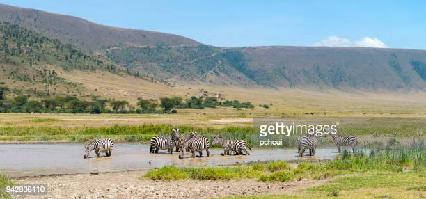 Landscape with zebras, Africa