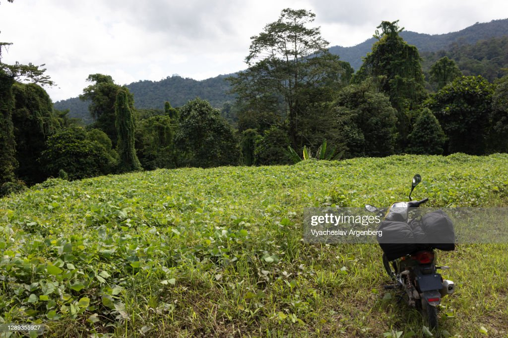 Landscaped forest, Sapulut-Kalabakan road, Borneo : Stock Photo