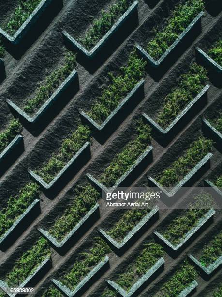 landscaped garden taken from above, lanzarote - sustainable lifestyle stock pictures, royalty-free photos & images