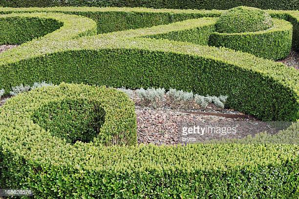 Landscaped garden with trimmed buxus hedges.
