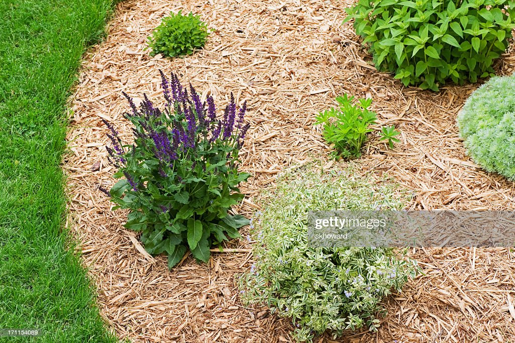Landscaped Perennial Flower Garden With Wood Chip Mulch Stock Photo