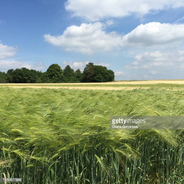 landscaped view - landschaft stock pictures, royalty-free photos & images
