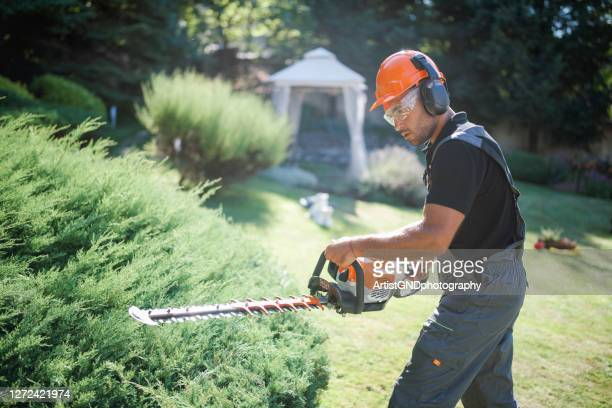 landscaper trim hedge with power saw in garden. - hedge stock pictures, royalty-free photos & images