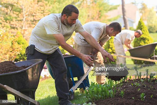 landscapers putting mulch from wheelbarrows into a home flower garden - mulch stock pictures, royalty-free photos & images