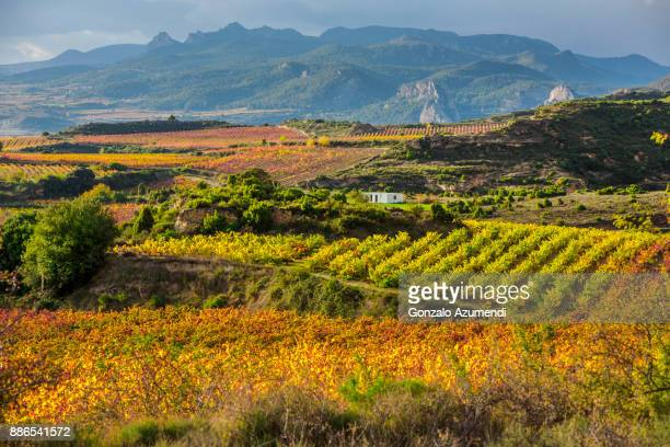 Landscapes and vineyards in Rioja alavesa.