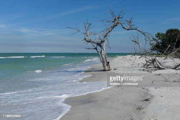 Landscapes from the protected Cayo Costa State Park, a barrier island in the Gulf of Mexico, as seen on JANUARY 08 in Cayo Costa, Florida.