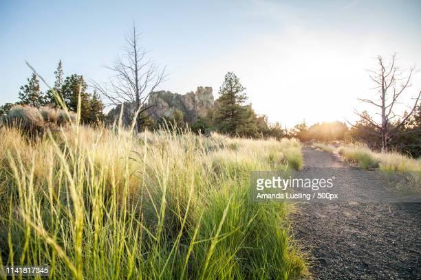 landscapes image - amanda and amanda stock pictures, royalty-free photos & images