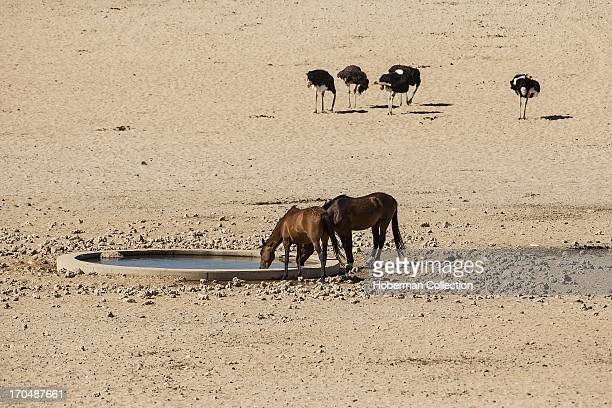 Landscapes of wild horses at KleinAus Vista in Namibia
