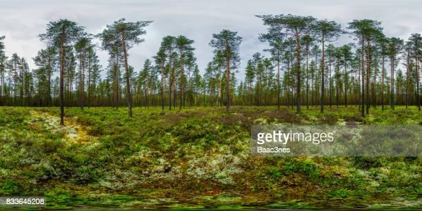 360 vr landscapes - pine forest, norway - 全天周パノラマ ストックフォトと画像